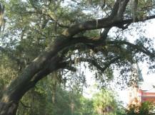 Savannah-Georgia-046-Large-1024x768